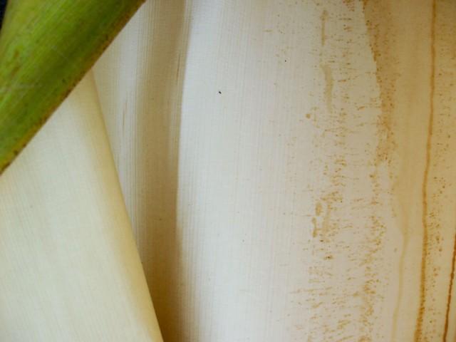 Palm Leaf VIII