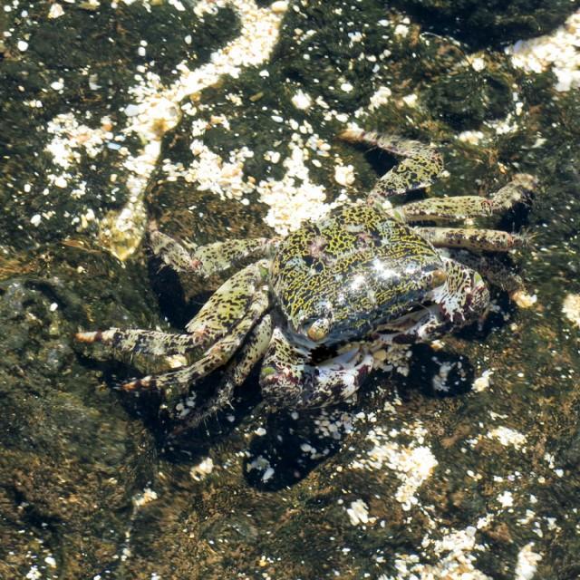 Crab Walk - 213349-760