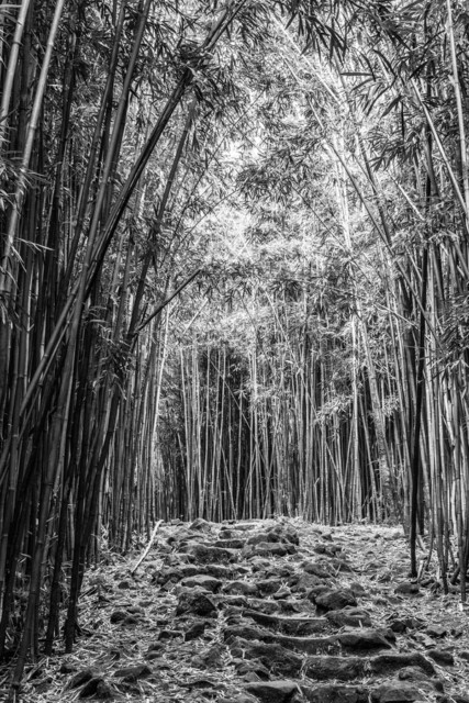 Bamboo-Forest- Maui, Hawaii- 216117-1727