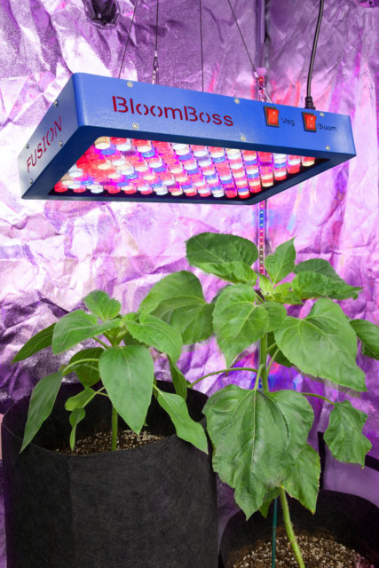 Bloom Boss Product - Fusion 600