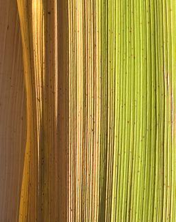 Palm Leaf V